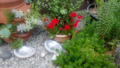 Why Not Create Small, Nurturing Spots around your Home and Yard?