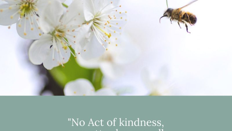 Everyone Needs To Be Treated With Kindness!